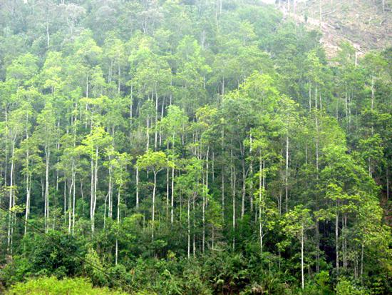Trông rừng